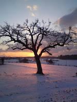 sun behind tree by springtime87