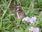 Butterfly flutter away