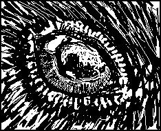 Eye of the Bird by Rafta