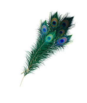 Peacock Feather Png