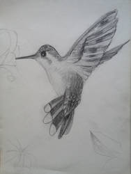 Hummingbird by tereyaglikedi