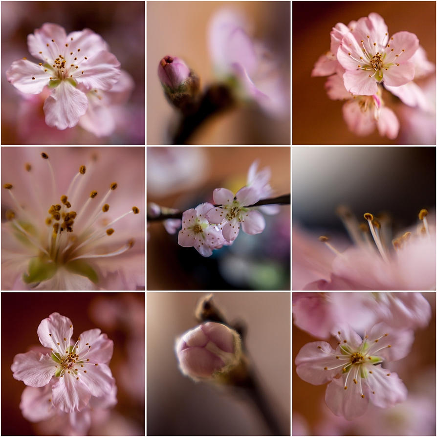 Blossom-scope by Rob1962