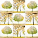 Autumnmood III by Rob1962