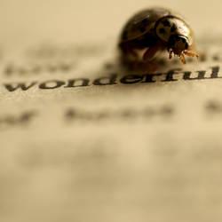 a ladybug's opinion by homedoggieo