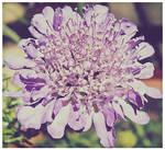 Purple Pin Cushion by VINpixPhotography