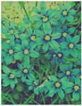 VIN Blue Wilds