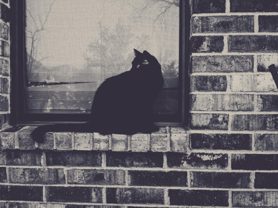 Cat named Taira by VINpixPhotography