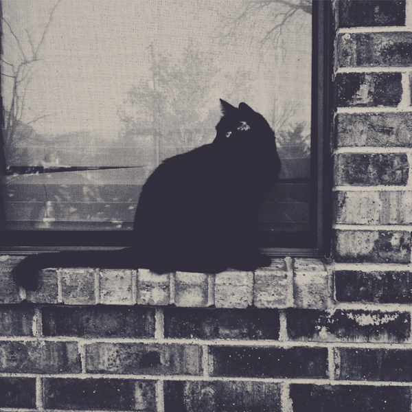 Box Kitty by VINpixPhotography
