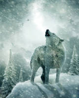 Howling in the Cold