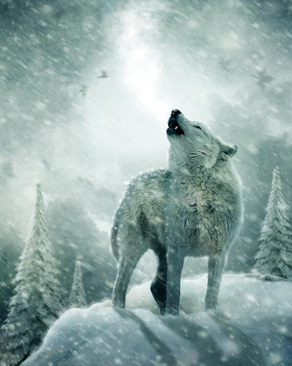 Howling in the Cold by no1intheworld