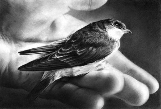 A Swallow In Hand