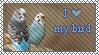 I love my bird by Nacht-Vico
