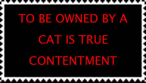 to be owned by a cat