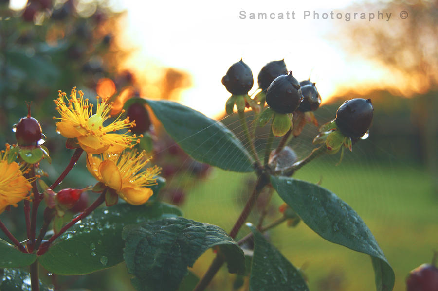 Autumn Begins by Samcatt