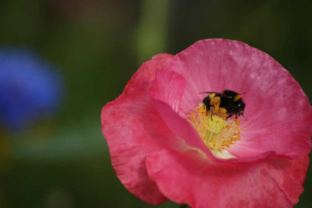 little busy bee by Samcatt
