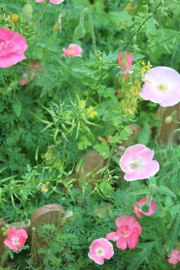 Field of Pink by Samcatt