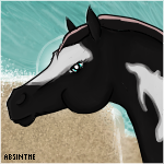 Headshot For 027 Midnight Storm by Ride4Life-Stables