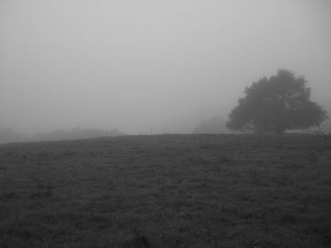 Gray Pasture