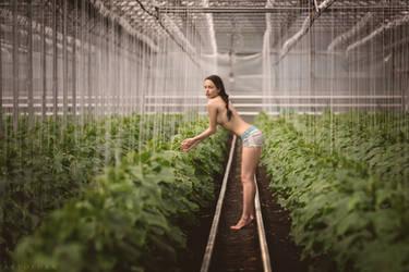 Spiritual Garden by ArtofdanPhotography