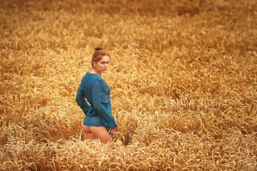 Golden Field by ArtofdanPhotography