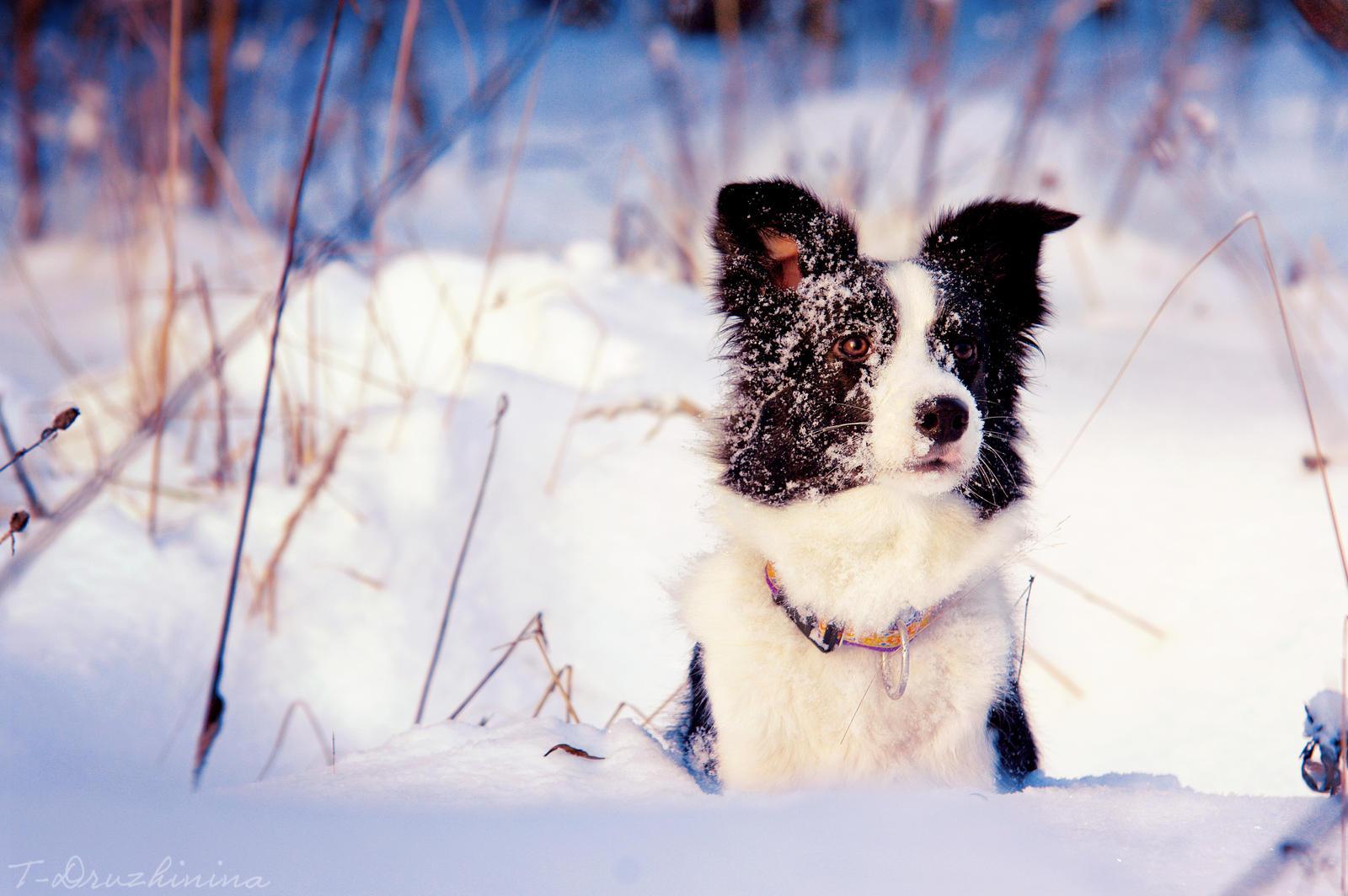 Winter by T-Solnechnaya