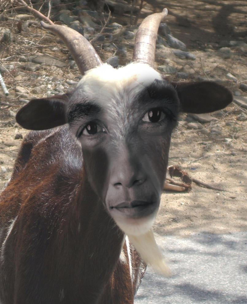 obama_goat_by_ritter99-d3elt51.jpg