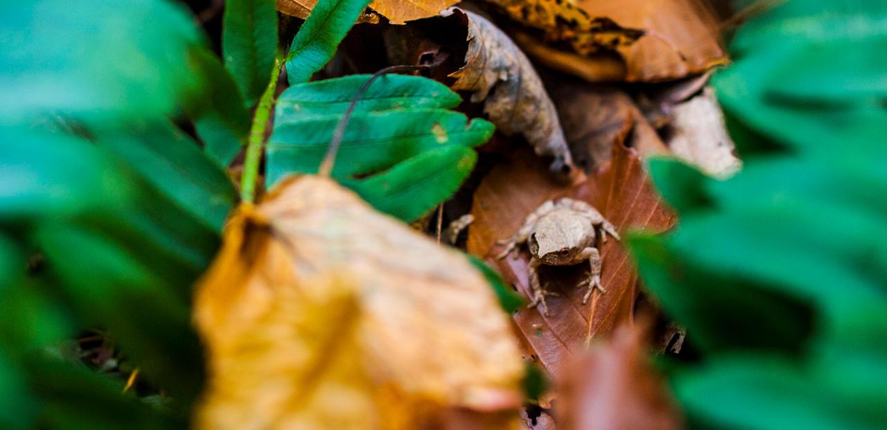 Frog in the Woods by jimloomis