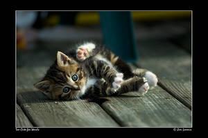 Too Cute for Words by jimloomis