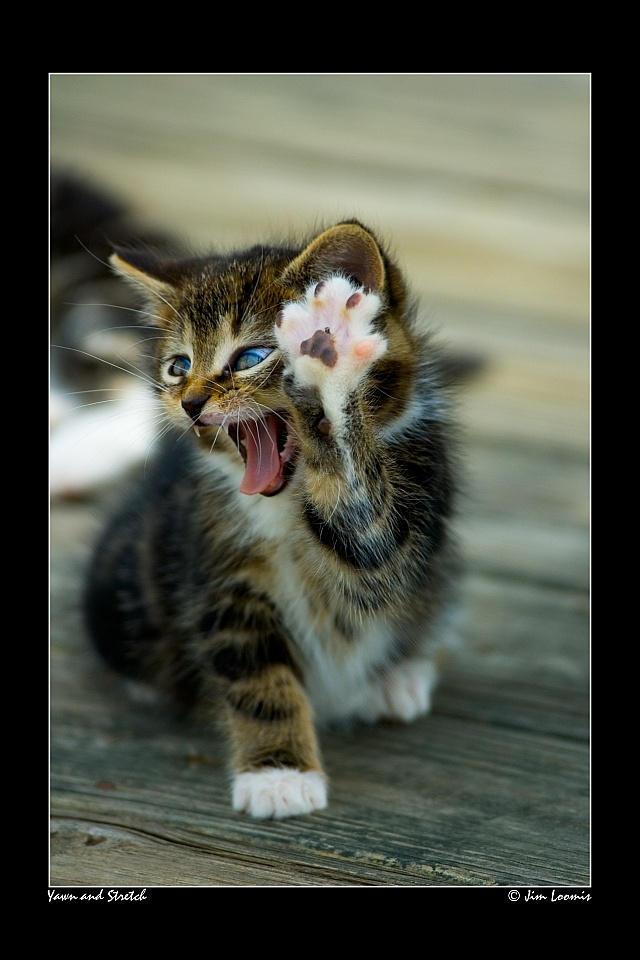 Yawn and Stretch by jimloomis