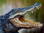 Blue Crocodile by RavenCorona