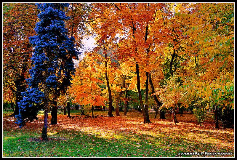 autumn picture by Iulian-dA-gallery