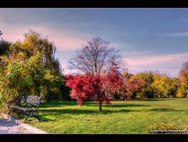 memories of autumn... by Iulian-dA-gallery