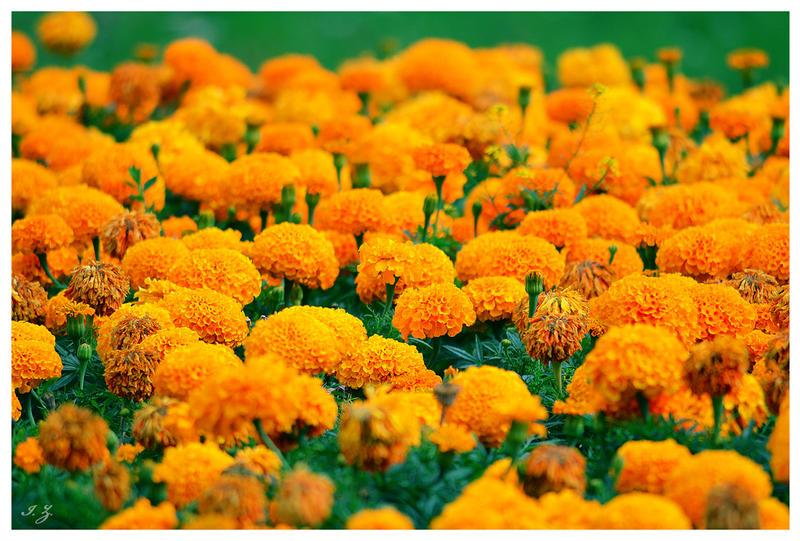 orange stain by Iulian-dA-gallery