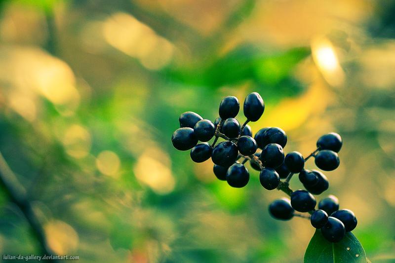 berry by Iulian-dA-gallery