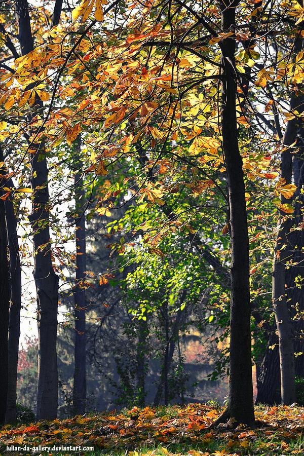 autumn forest by Iulian-dA-gallery