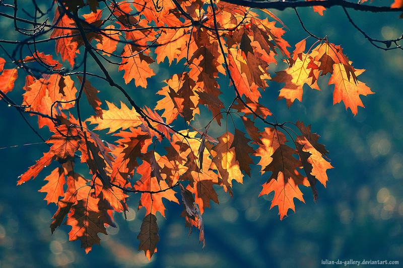magical autumn by Iulian-dA-gallery