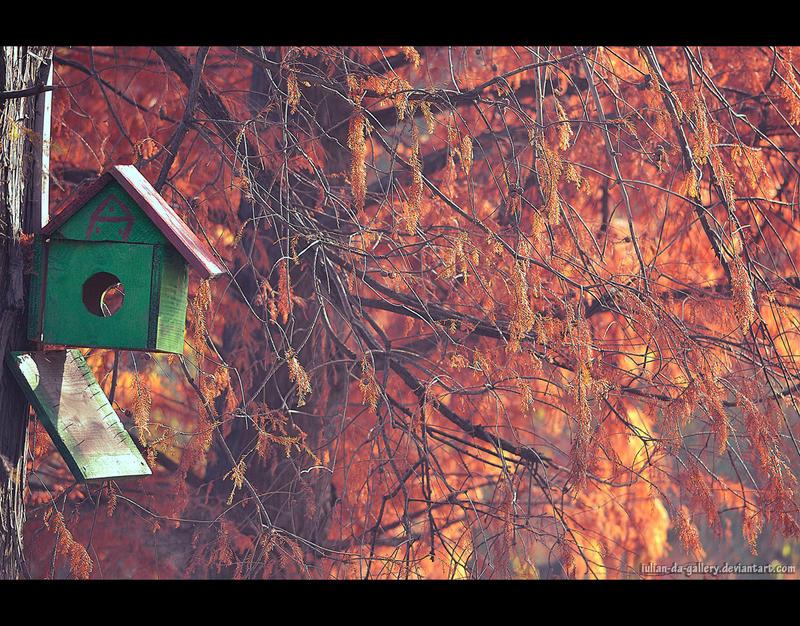 wilderness autumn by Iulian-dA-gallery