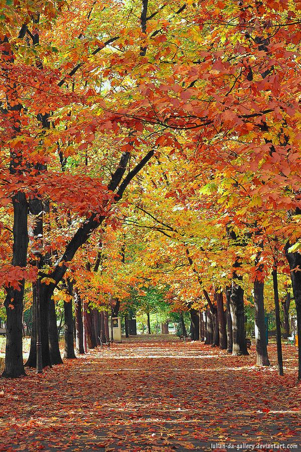 autumn scenery by Iulian-dA-gallery