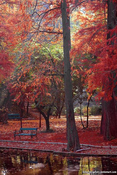 autumnscapes by Iulian-dA-gallery