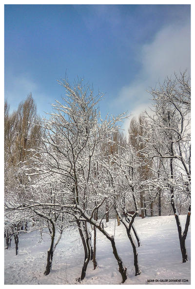 frost... by Iulian-dA-gallery