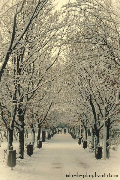 winter path... by Iulian-dA-gallery