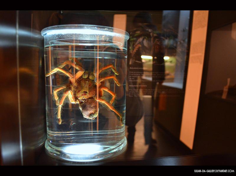 tarantula by Iulian-dA-gallery