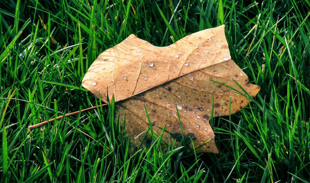 autumn dew by Iulian-dA-gallery