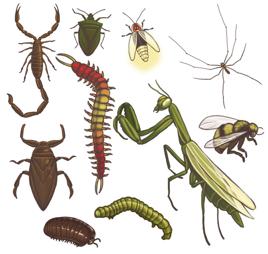 insects pictures with names images