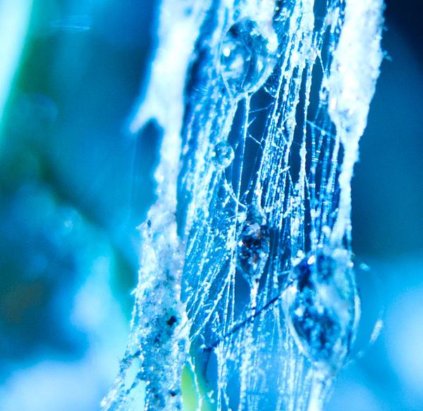 Tangled Webs by ElindielForestStar