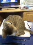 Why you can't draw with a cat