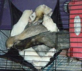 Ferret Sleep Pile