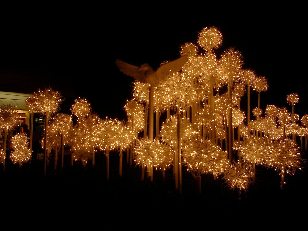 Christmas Lights + Dove Epcot2