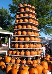 Pumpkin Gourd Stock 11