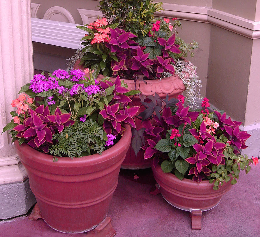 Pink flowers in pots by wdwparksgal stock on deviantart pink flowers in pots by wdwparksgal stock mightylinksfo